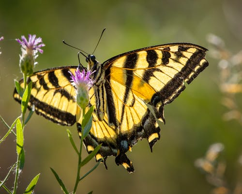 Free stock photo of butter, swallowtail