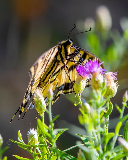 Free stock photo of butterfly, swallowtail