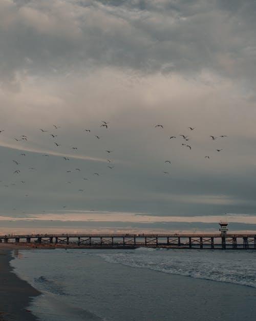 Immagine gratuita di acqua, alba, cloud, fiume