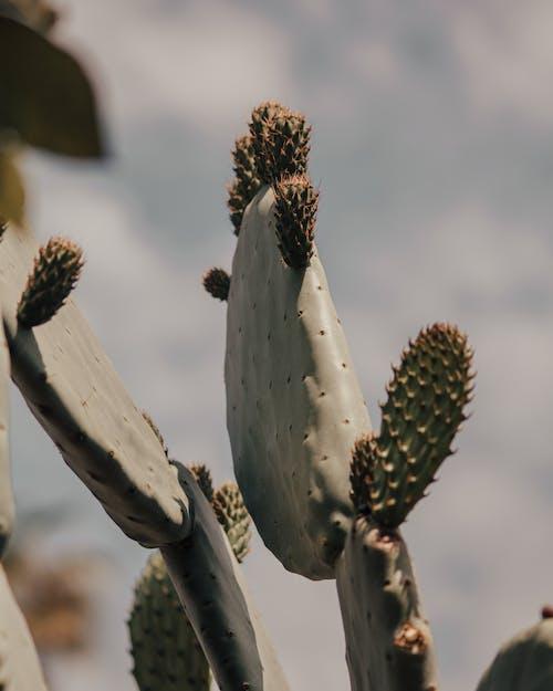 Immagine gratuita di agave, ago, aloe, arido