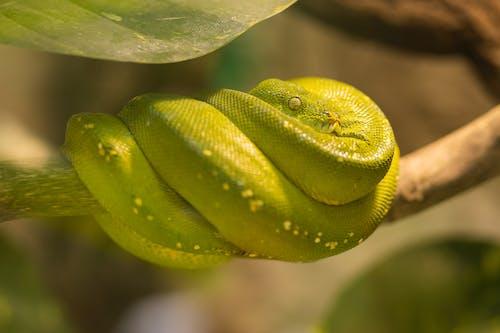 Kostenloses Stock Foto zu exotisch, grün, nahansicht