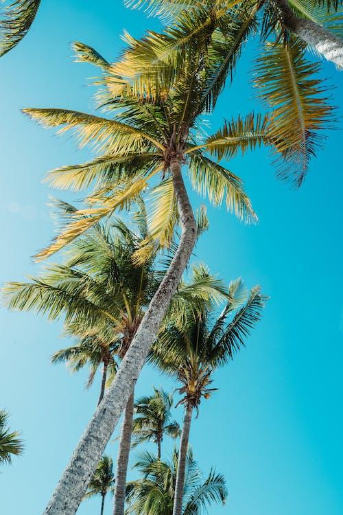 假期, 加勒比海, 土耳其藍, 夏天 的 免費圖庫相片