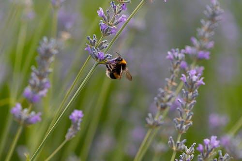 Free stock photo of abeja, alas, Amarillo, bee