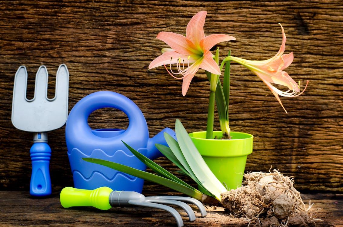 Безкоштовне стокове фото на тему «білий, бруд, весна»