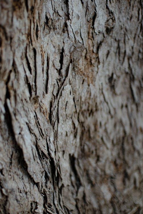 Immagine gratuita di abbaiare, albero, corteccia, fotogramma intero