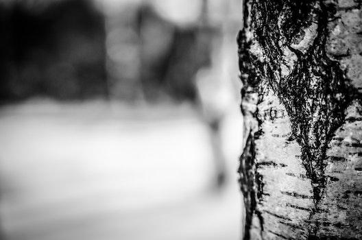 Free stock photo of black-and-white, tree trunk, bark, macro