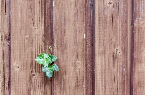 Green Leaf on a Brown Fence