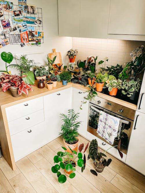 Various flowers in flowerpots in kitchen