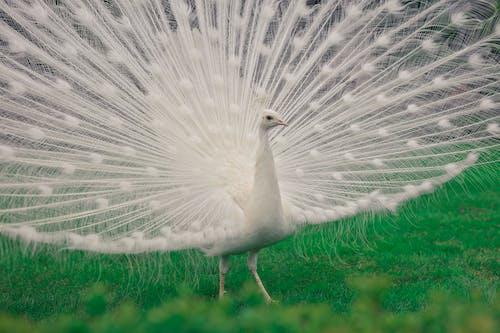 Immagine gratuita di ala, animale, astratto, becco