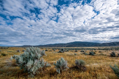 Picturesque landscape of steppe with small bushes and dry grass against hills at daytime