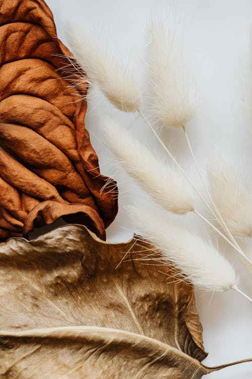 Brown and White Textile on Brown Textile