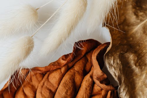 White Fur on Brown Dried Leaves