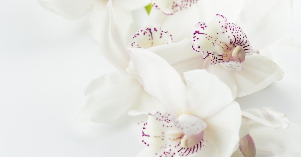 Картинка розовая, открытка орхидеи для фотошопа