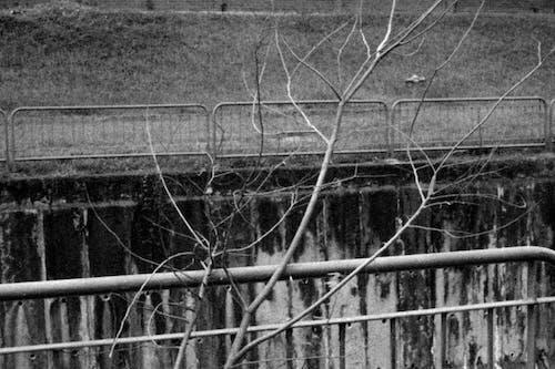 Kostnadsfri bild av bnw, gränd, kanal, natur