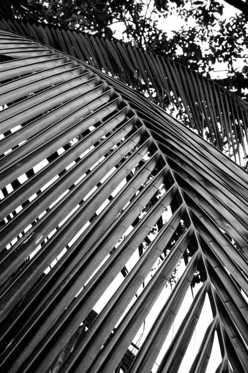 Kostnadsfri bild av abstrakt, arkitektur, blad, bnw