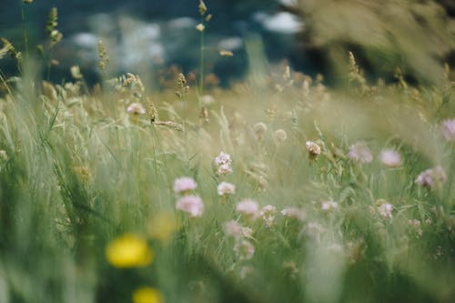Wild meadow with tall grass and delicate blooming flowers growing in countryside on sunny day