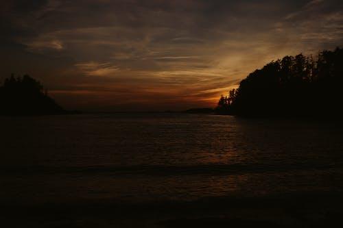 Silhouettes of trees growing near sea at sundown