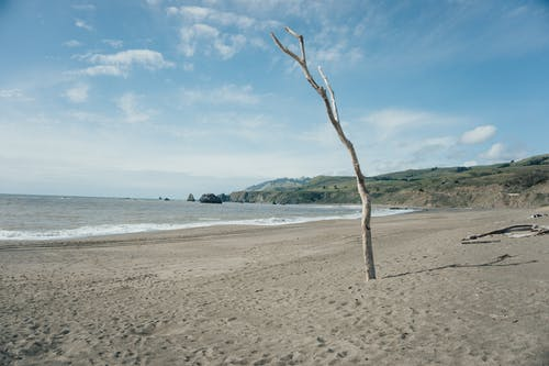 Broken leafless tree on empty sandy beach near waving sea against cloudy blue sky
