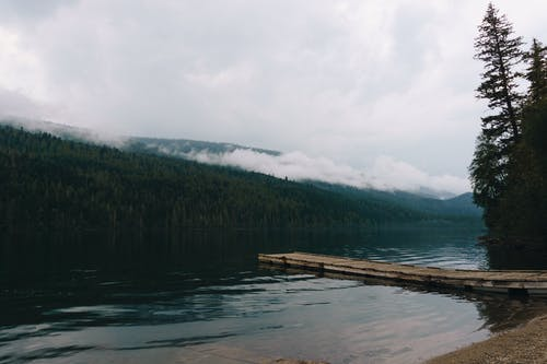 Evergreen trees growing on shore of lake on overcast day