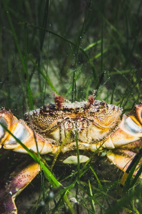 Brown and White Crab on Green Grass
