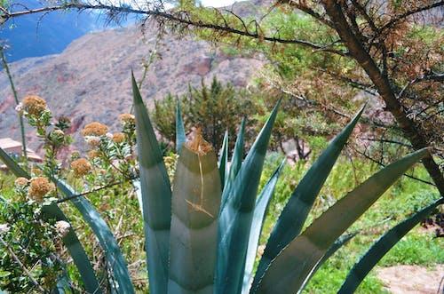 Free stock photo of desert, desert mountain, desert plant, desert plants