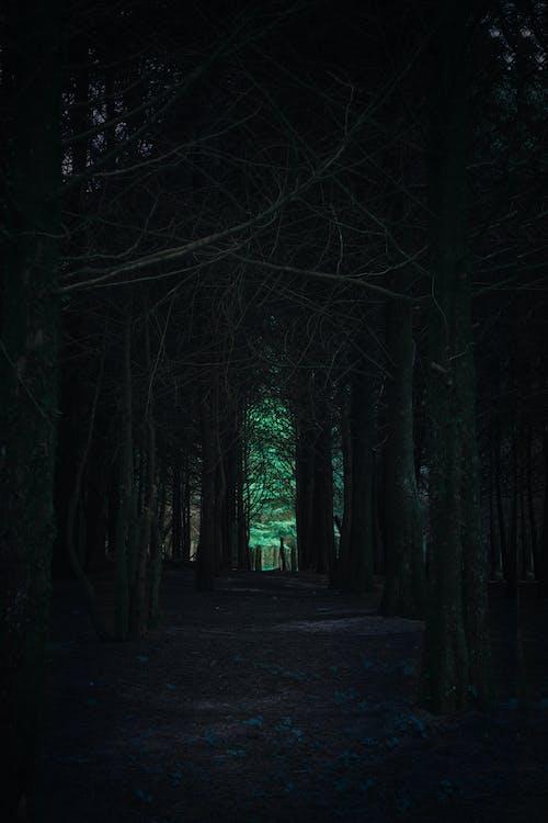 Free stock photo of bosque, caminar al atardecer