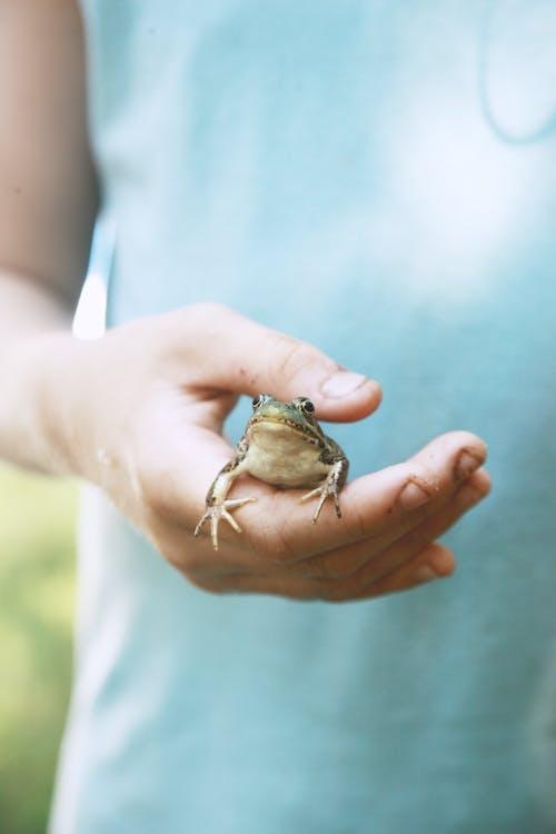 Imagine de stoc gratuită din adorabil, adult, albastru