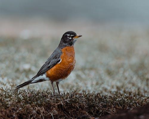 Wild bird on grass in autumn