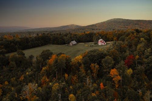 Photos gratuites de à couper le souffle, aérien, arbre, automne