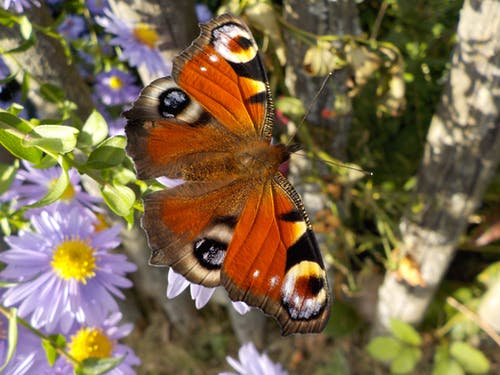 Orange White and Black Butterfly Perched on Flower