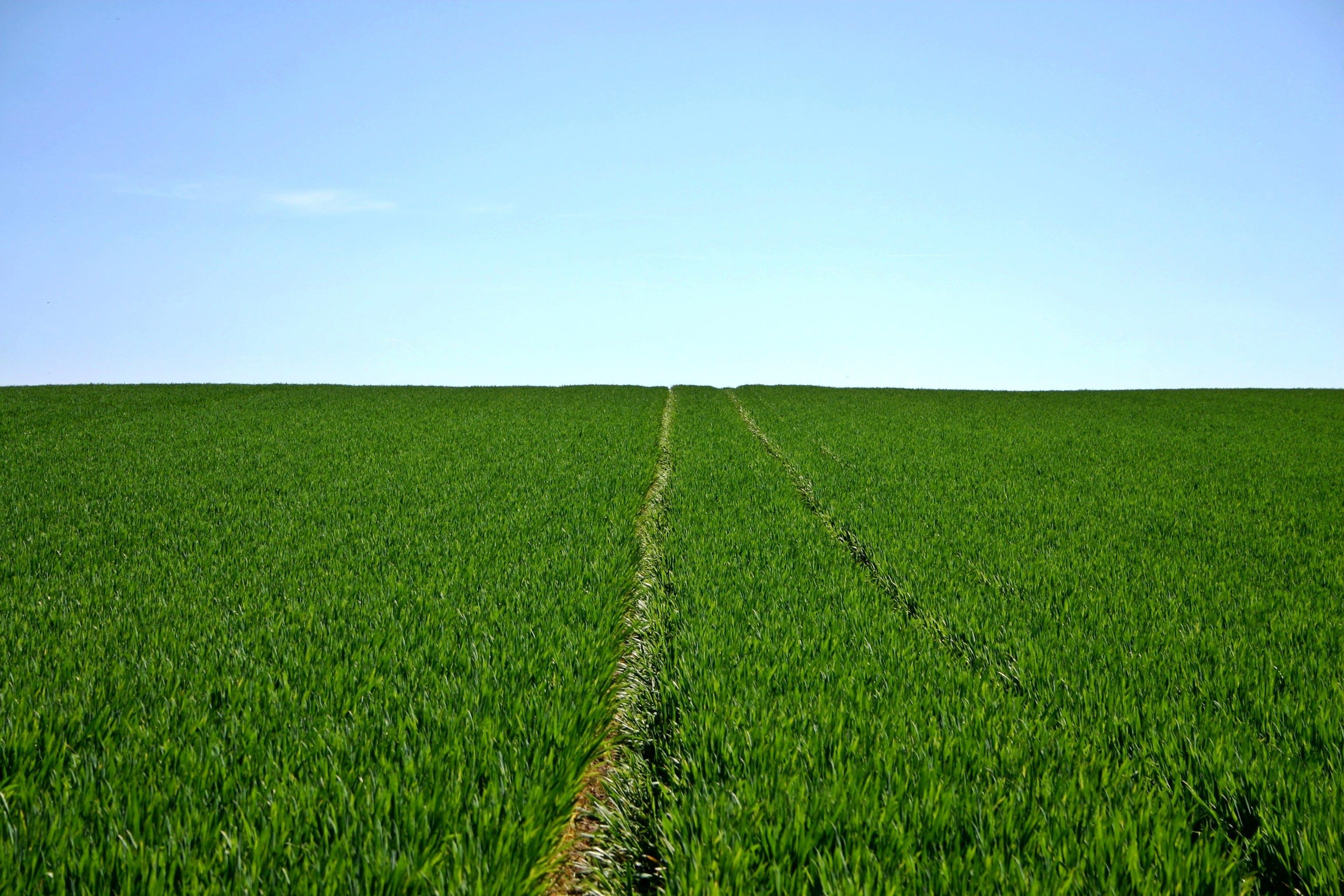フィールド, 空, 緑, 自然の無料の写真素材