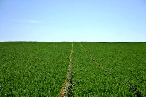 Foto stok gratis alam, bidang, gelanggang, hijau
