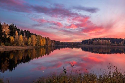 Immagine gratuita di acqua, alba, alberi