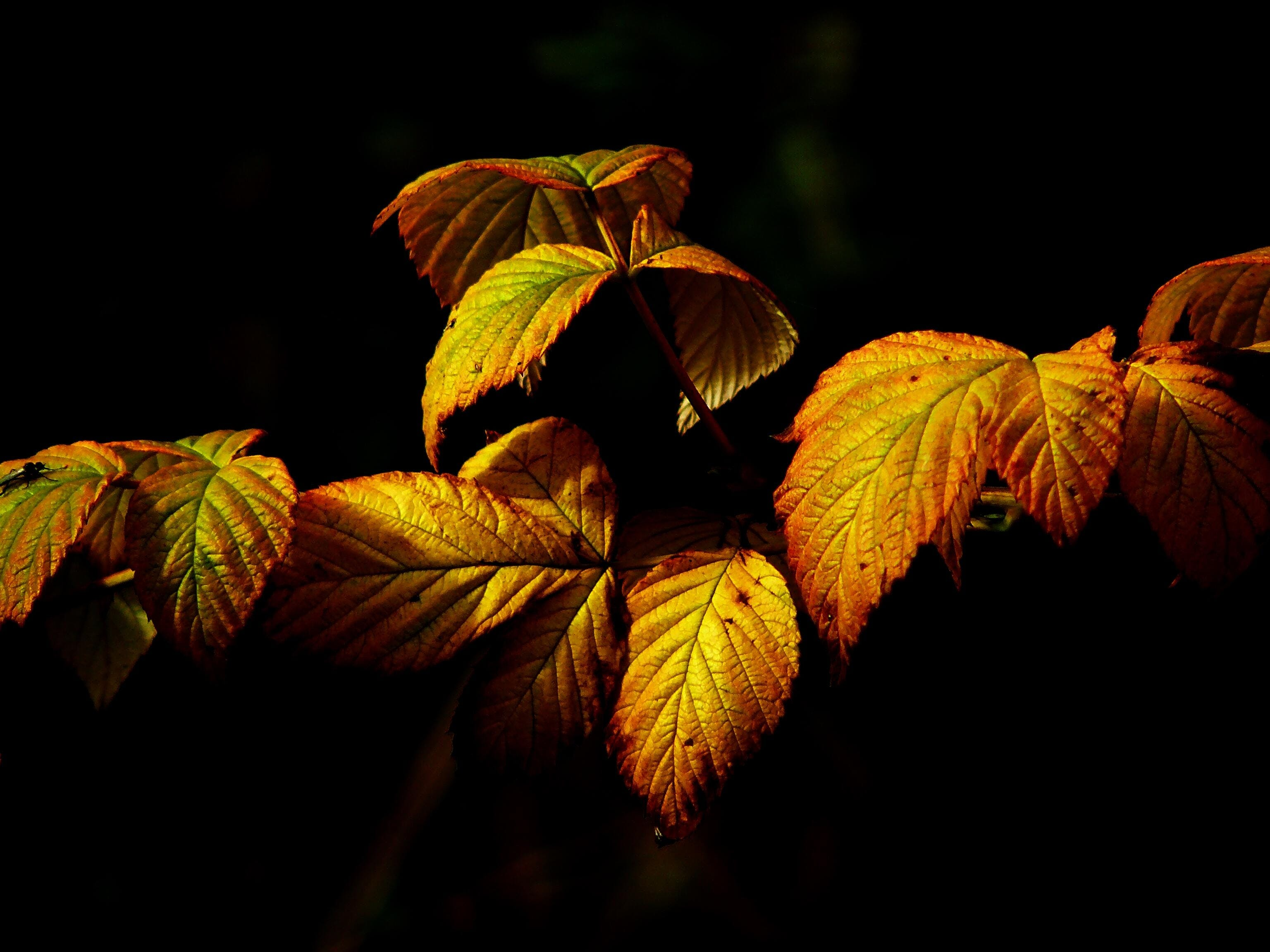 Orange and Green Leafed Plant