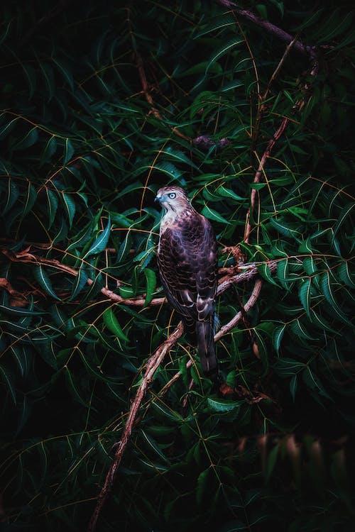 Fotos de stock gratuitas de águila, águila - pájaro, arco iris