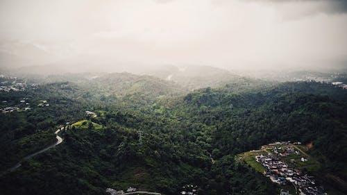 Ingyenes stockfotó áttűnés, domb, erdő, erdő háttér témában
