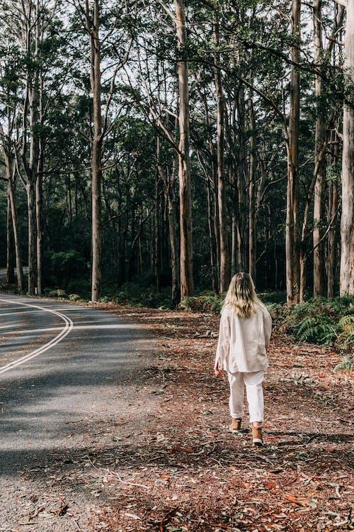 Gratis stockfoto met alleen, bladeren, bomen