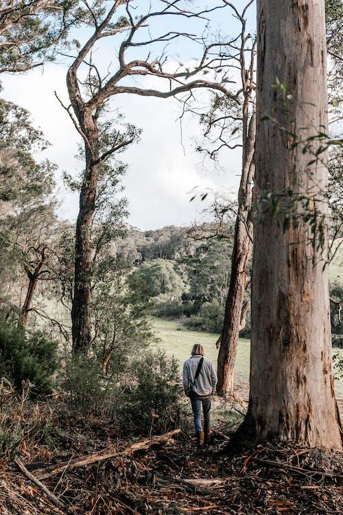 Man in Gray Hoodie Standing Near Brown Tree