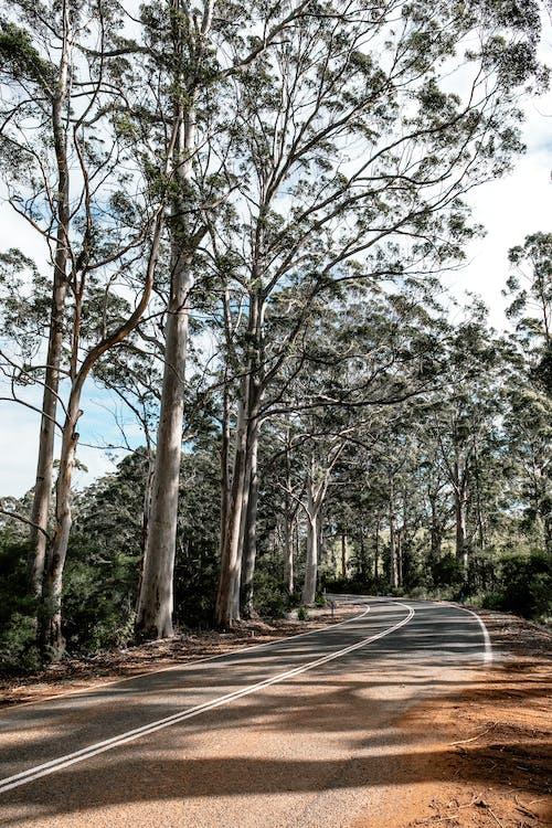 Empty roadway between overgrown trees in summer