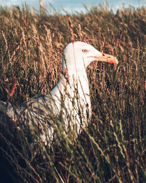 Kostnadsfri bild av djur, etretat, Europa, fågel