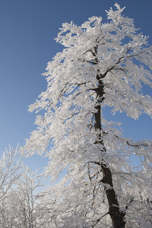 Snow Covered Tree Under Blue Cloudy Sky during Daytime