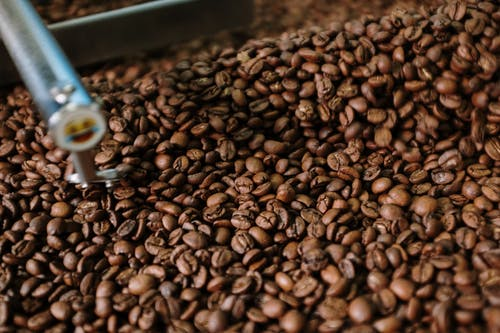Coffee Beans on Stainless Steel Tray