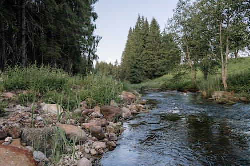 Ilmainen kuvapankkikuva tunnisteilla järvi, joen ranta, joki, jokiranta