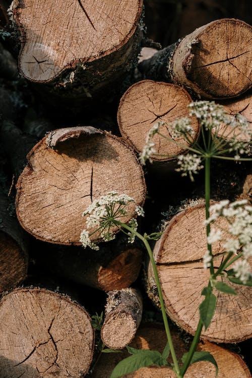 Immagine gratuita di abbaiare, boschi, campagna, ceppo di albero
