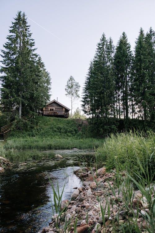 Ilmainen kuvapankkikuva tunnisteilla järvi, joki, kaisla, kävelykeppi