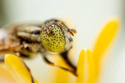 Gratis lagerfoto af bestøve, bestøvning, bi, blomst