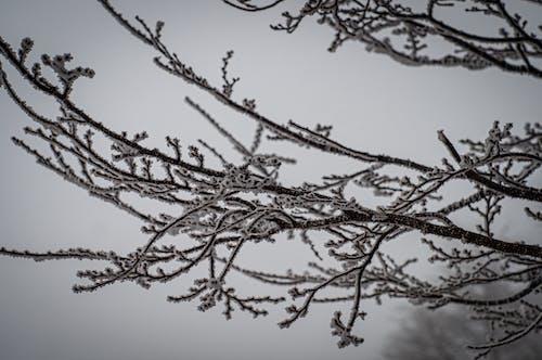 Free stock photo of árvores de inverno, inverno, neve