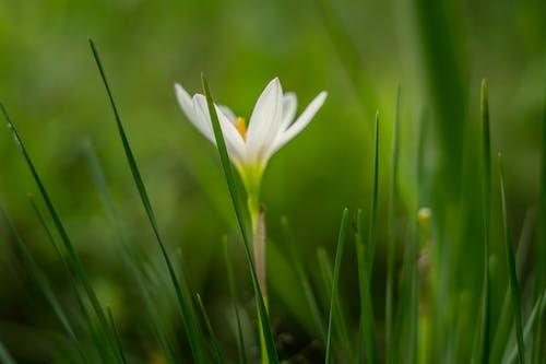 Gratis lagerfoto af baggrund, blomst, fotografi, græs