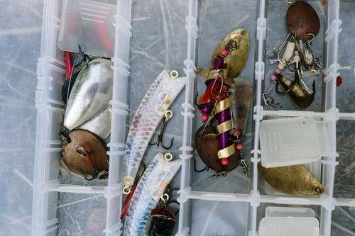 Silver Fish on White Plastic Container