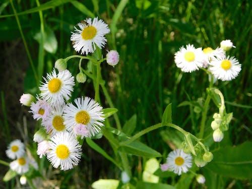 Foto profissional grátis de flores silvestres